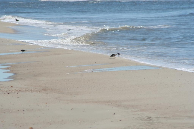 Gulf Coast Florida Beach Real Estate